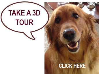 Take a 3D Tour with dog
